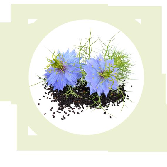 Zu den Pflanzen – NaturWiki